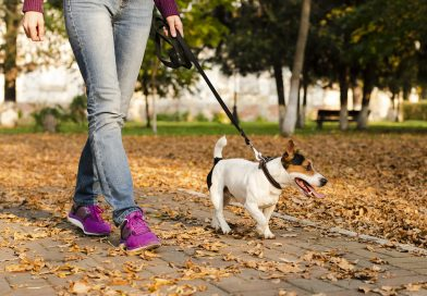 How to sustainably manage pet waste