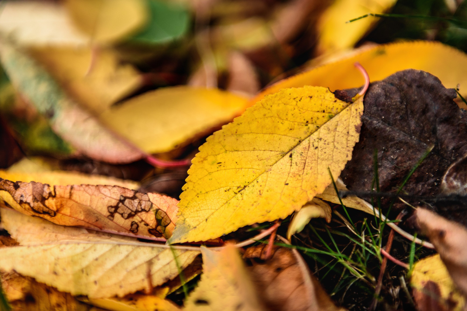 7 tips for sustainable fall yard clean-up
